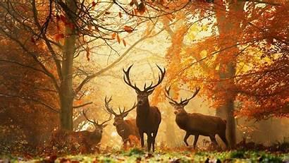 Deers Forest Animals Horns Sharp Wallpapers