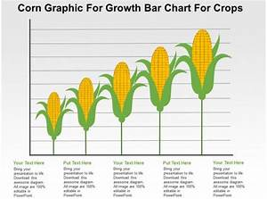 Corn Graphic For Growth Bar Chart For Crops Flat