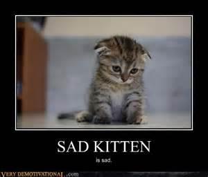 Sad Kitten Meme