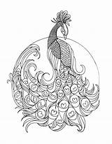 Peacock Colouring Grown Lostbumblebee Coloring Printable Pages Adult Detailed sketch template