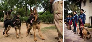 Life Of Dogs In The Indian Armed Forces | DogExpress