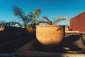 Palmenarten Für Draußen : palmen rausstellen wann kann sie ins freie ~ Lizthompson.info Haus und Dekorationen