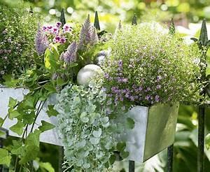 Blumen Für Südbalkon : zum nachpflanzen balkonkasten mit federbusch und ~ Watch28wear.com Haus und Dekorationen