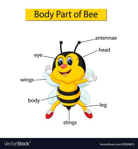 pin  body part  animals