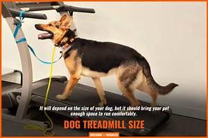 7 Best Dog Treadmills  U2013 Brands  Training  Buying Guide