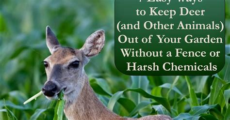 how to keep deer out of your garden florassippi 7 easy ways to keep deer and other