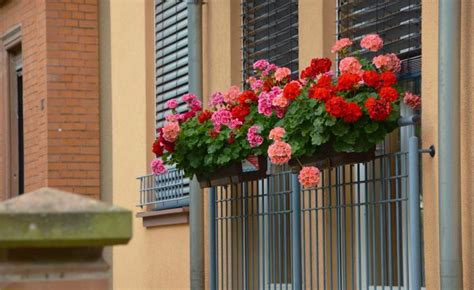 Best Window Plants by Best Plants For Window Boxes Sun Or Shade The