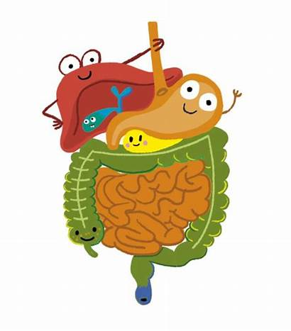 Digestive System Funny Stomach Science Clipart Character