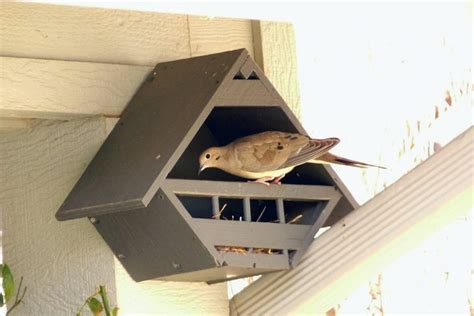 mourning dove birdhouse plans