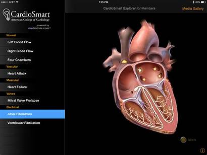 Cardiology Apps App Cardiologists Medical Patients College