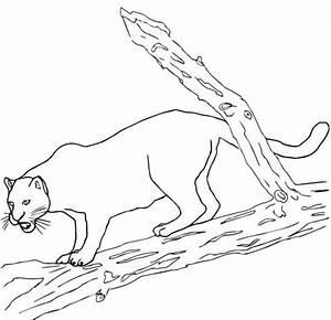Black Jaguar Coloring Page Free Printable Coloring Pages