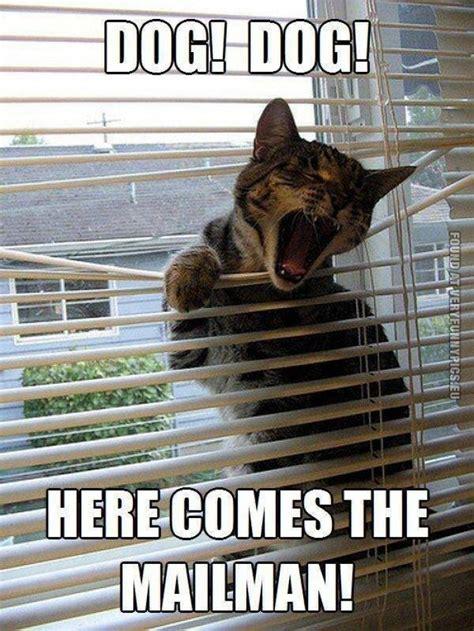 Dog And Cat Memes - dog dog cat meme