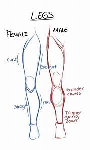 Male And Female Anatomy Reference Guide