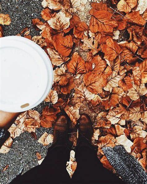 fall leaves   prettiest falling  fall fall