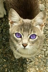 cat with violet purple
