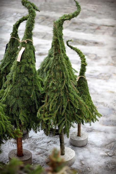 vackralove  hobbit trees gotta