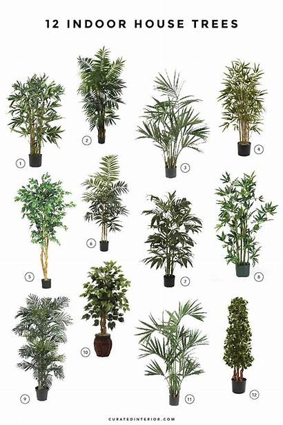 Indoor Plants Trees Tall Tree Plant Palm