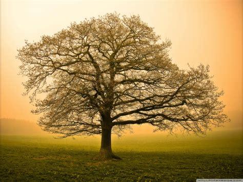 beautiful tree hd wallpaper gallery