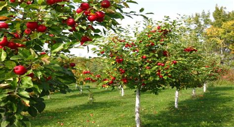 Best Backyard Fruit Trees by How To Build Your Own Backyard Fruit Tree Orchard Brazo