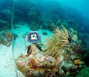 live underwater web cam launched in curacao diverwire With ocean floor camera live stream