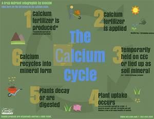 Cacium Cycle in Agriculture [Infographic] - EcoGEM