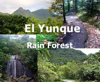 Y es conocido por sus árboles y aves raros. geografia: geografia boques de Puerto Rico