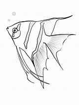 Fish Angel Coloring Angelfish Pages Sketch Realistic Printable Drawing Sketches Getdrawings Sky Chameleon Tropical Recommended Coloringbay Getcoloringpages sketch template