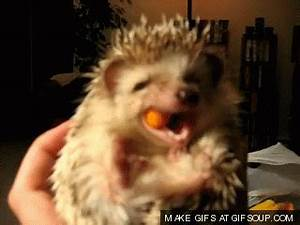 Hedgehog Laughing GIF - Find & Share on GIPHY