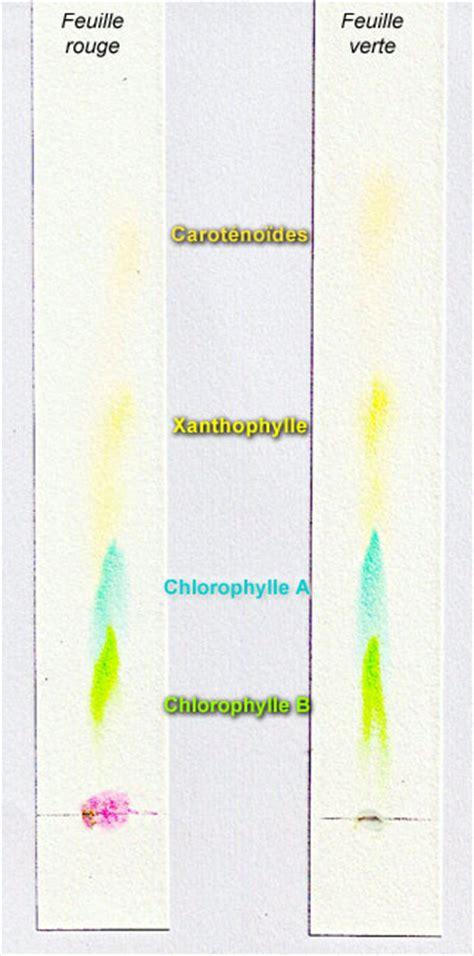 ts specialite energie  cellule vivante