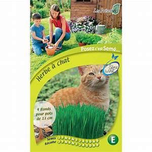 Graine Herbe A Chat : herbe chat en sachet s me la vie jardinerie truffaut ~ Melissatoandfro.com Idées de Décoration