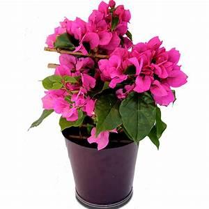 Petit Arbuste Fleuri : fleurs deuil d c s le fleurissement d 39 obs ques en t le ~ Premium-room.com Idées de Décoration