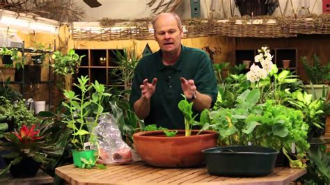 How To Grow Vegetables Indoors In A Pot-youtube