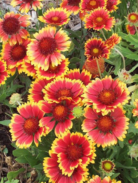 the best perennials for cutting perennials flower and
