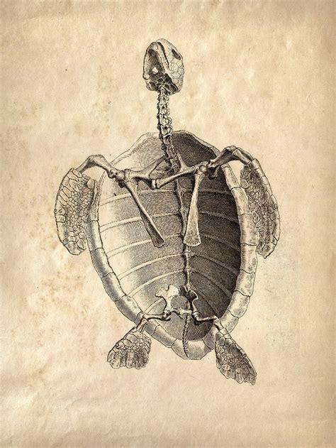 vintage animal anatomy sea turlte skeleton poster