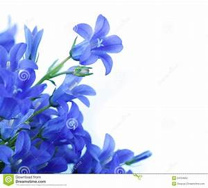 Flowers On A White Background, Dark Blue Hand Bell Stock ...