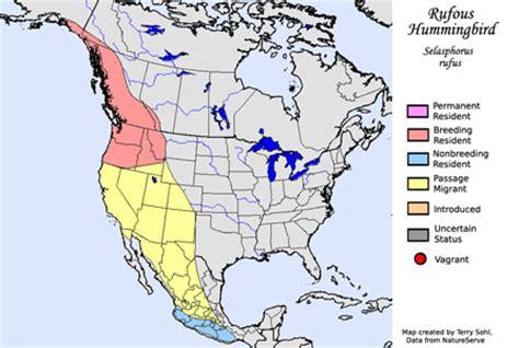 rufous hummingbird migration range diet facts pictures