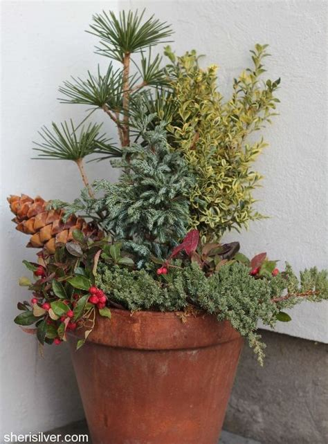 1000+ Images About Winter Planters On Pinterest Window