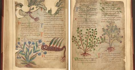 medieval herbal remedies manuscript