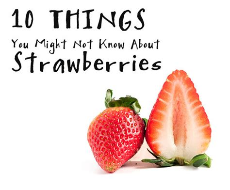 strawberry facts lush fresh handmade blog 10 things you might not know about strawberries