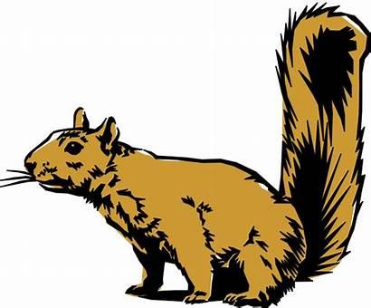 Clip Animals Animal Clipart Squirrel Cliparts Science