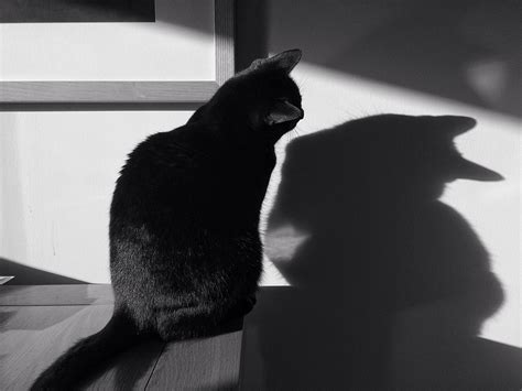 Black Cat Countdown-day 2