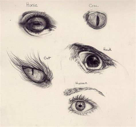draw  animal  human eyes drawingsart