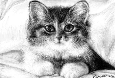 cute kitten drawing  annokat  deviantart