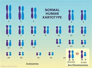 What Are Chromosomes