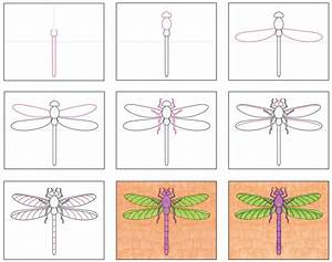Draw A Realistic Dragonfly  U00b7 Art Projects For Kids