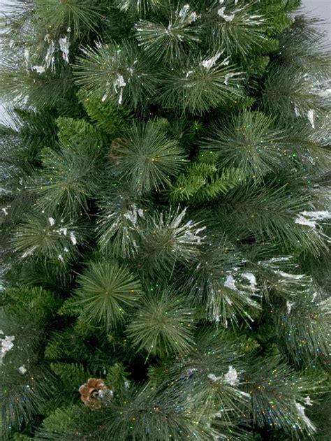 siberian cedar pine christmas tree  christmas