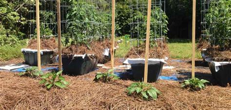 April Is Vegetable Planting Time In Northwest Fla Grow