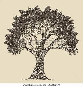 Tree Drawing Stock Images, Royalty-Free Images & Vectors ...