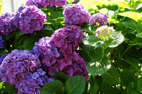 flowering shrubs pacific northwest megan seagren s journal plants for pacific northwest shade gardens