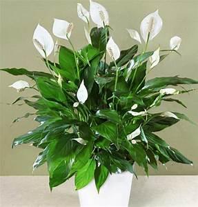 Pflegeleichte Zimmerpflanzen Mit Blüten : pflegeleichte zimmerpflanzen im schlafzimmer sorgen f r ruhigen schlaf ~ Eleganceandgraceweddings.com Haus und Dekorationen